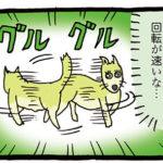 クルクル回る犬