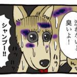シャンプー嫌いな犬