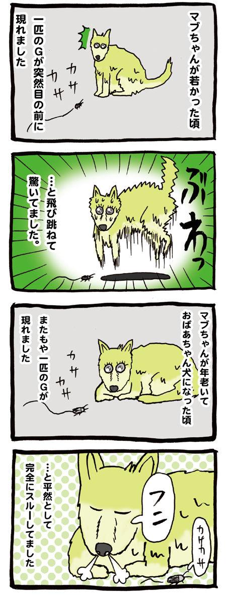 ゴキブリに驚く犬