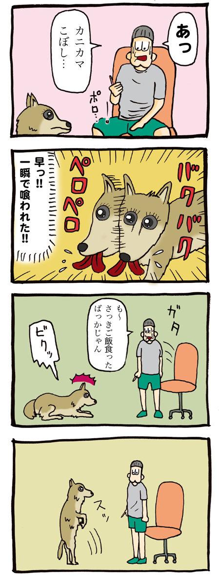 かにかまに反応する犬