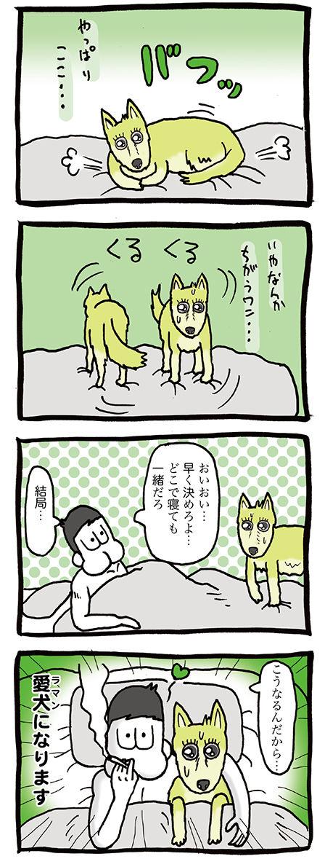 寝る前に回転する犬