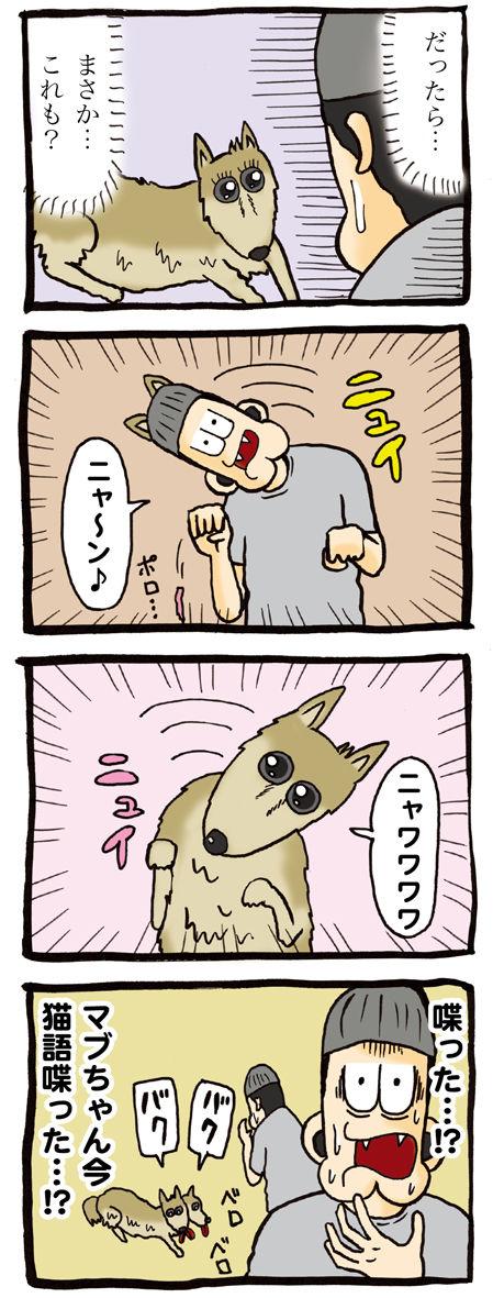 猫語を話す犬